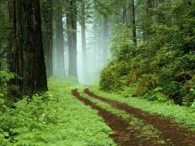 حدنصاب تراز دعوت به مصاحبه دکتری مدیریت جنگل