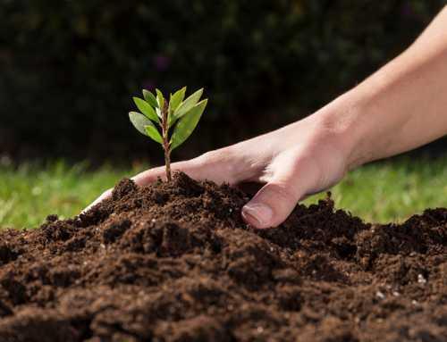 حدنصاب تراز دعوت به مصاحبه دکتری حاصلخیزی و زیستفناوری خاک (کد 2420)