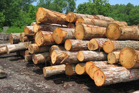 حدنصاب تراز دعوت به مصاحبه دکتری عمران و بهره برداری جنگل