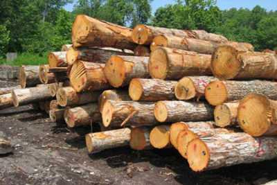 حدنصاب تراز دعوت به مصاحبه دکتری حفاظت و اصلاح چوب