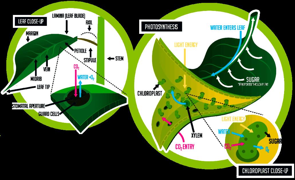 حدنصاب تراز دعوت به مصاحبه دکتری زیستشناسی گیاهی – فیزیولوژی (کد 2220)