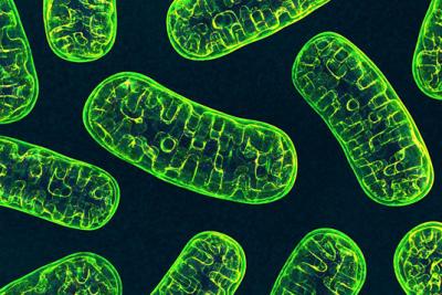 حدنصاب تراز دعوت به مصاحبه دکتری زیست شناسی گیاهی - سلولی و تکوینی