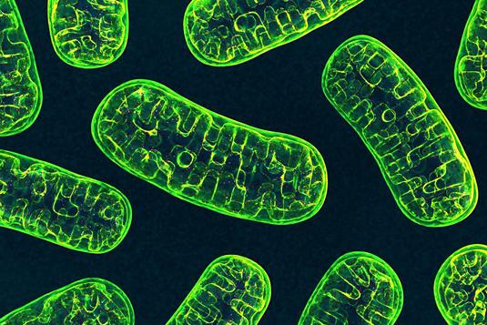 حدنصاب تراز دعوت به مصاحبه دکتری زیستشناسی گیاهی – سلولی و تکوینی (کد 2222)
