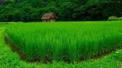 حدنصاب تراز دعوت به مصاحبه دکتری توسعه کشاورزی