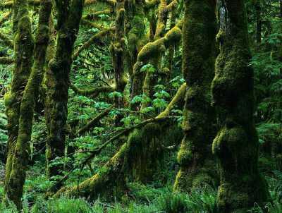 حدنصاب تراز دعوت به مصاحبه دکتری علوم زیستی جنگل