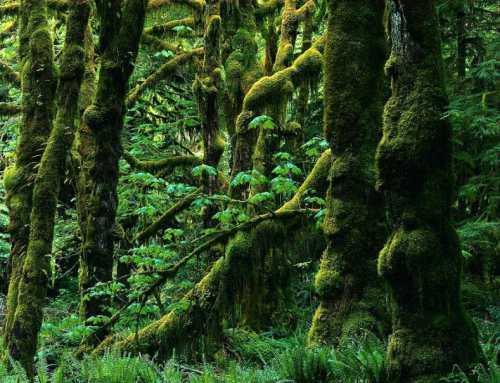 حدنصاب تراز دعوت به مصاحبه دکتری علوم زیستی جنگل (کد 2443)