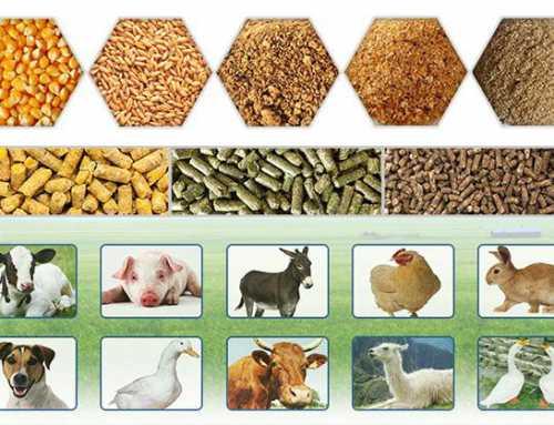حدنصاب تراز دعوت به مصاحبه دکتری بهداشت خوراک دام (کد 2712)