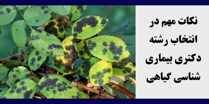 مشاوره انتخاب رشته دکتری بیماری شناسی گیاهی